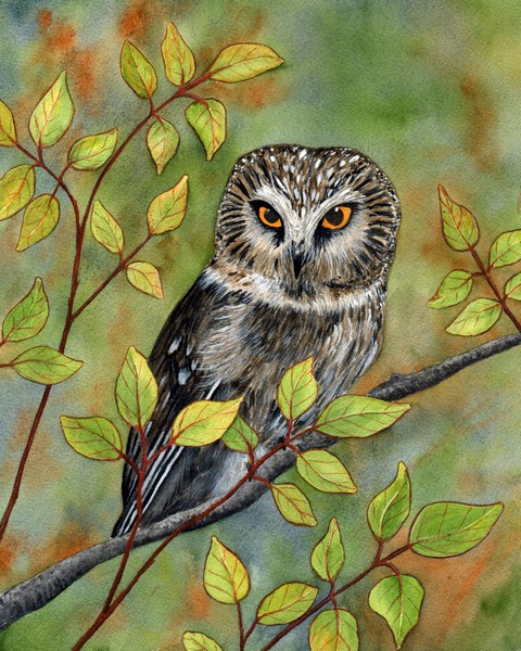 Diane Pope, Fall Colors, Saw Whet Owl