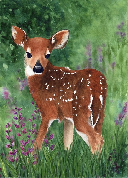 Diane Pope, Fawn