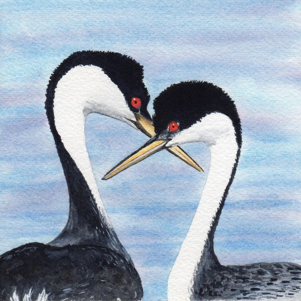 Diane Pope, Grebe Love
