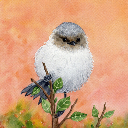 Diane Pope, Little Bushtit