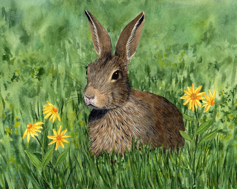 Diane Pope, Little Brown Bunny