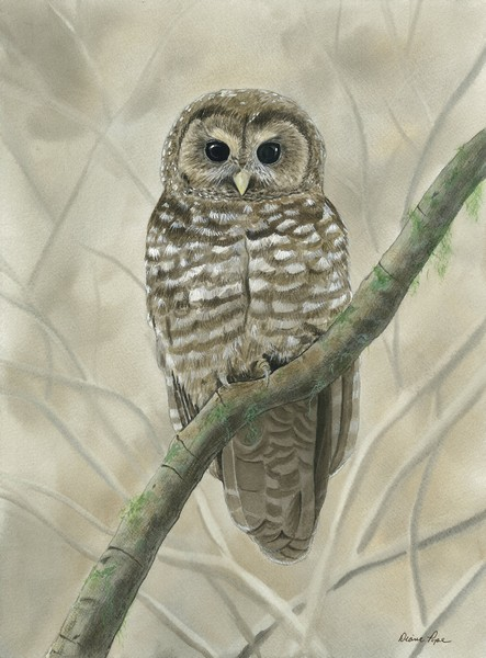 Diane Pope, Spotted Owl